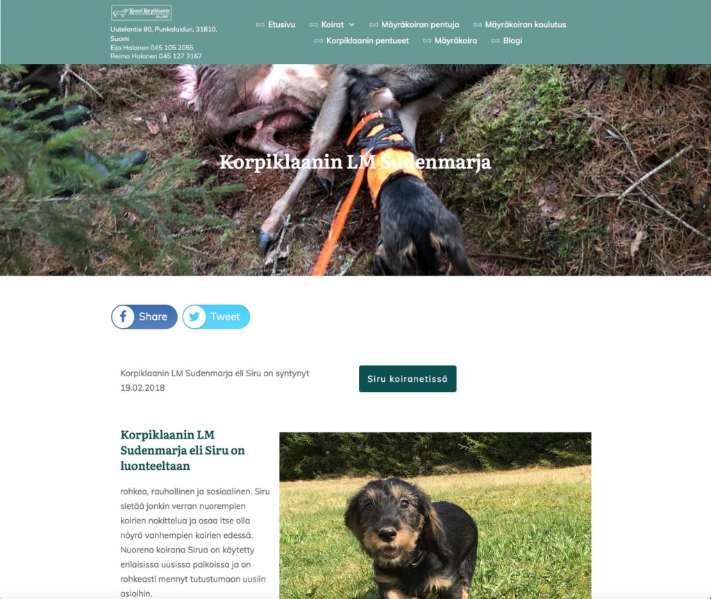 Edulliset WordPress kotisivut kennelille ja esimerkki perussivusta